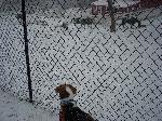 雪景色バロン1